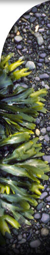 photo of seweed on sand