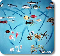 picture illustrating trophic interactions in a marine food web