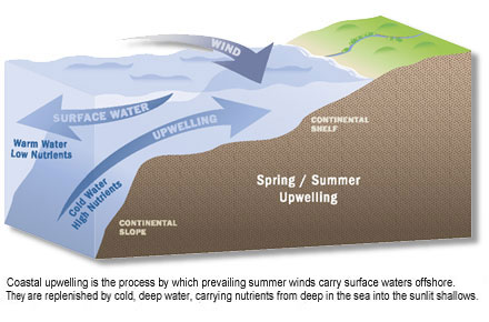 illustration of coastal upwelling - the process by which prevailing summer winds carry surface waters offshore