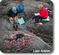 photo of scientists doing intertidal monitoring