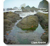 photo of rocky outcrops that form tidepools