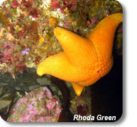photo of a sea star on a rocky reef
