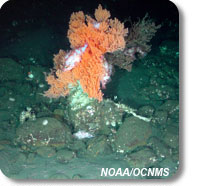 photo of coral and rockfish on seafloor