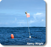 This picture shows an orange OCNMS mooring float and a 6 ft vertical pole and radar reflector on the surface of the ocean.