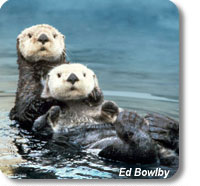photo of 2 sea otters