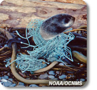 photo of entangled fur seal