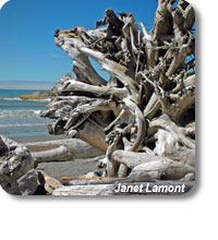 photo of driftwood
