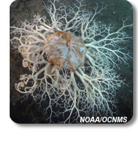 photo of a basket star