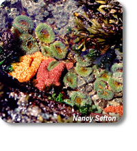 photo of anemone and starfish in a tidepool