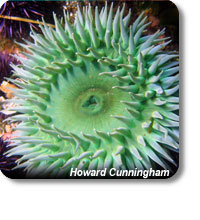 photo of a giant green anemone