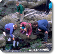 photo of children investigating a tidepool