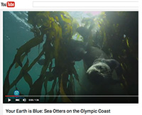 sea otters video thumbnail