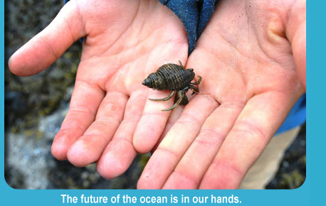 Photo of a hermit crab in open hands.