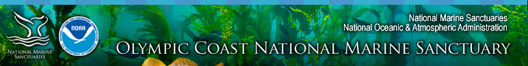 Olympic Coast National Marine Sanctuary Resource Protection section includes Regulations, Incident Response, Marine Debris, Wildlife Disturbance, Water Quality, Habitat Protection, and Permits