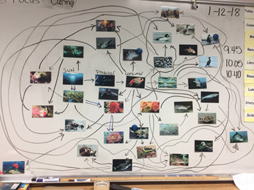 food web created by students using pictures